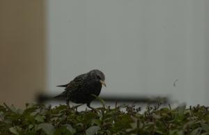 Observation, oiseaux, photo, ornithologie,location, vacances, Pas-de-Calais, Côte d'Opale, maison, gîte, appartement, weekend, midweek, semaine, last minute